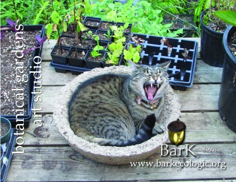 BarK Botanical Studio Vinny 4x5 flat