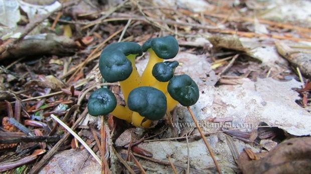 r-k-jellybabies-slar-2015-img_1483