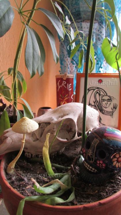 R.K. Mystery mushroom 1.jpg