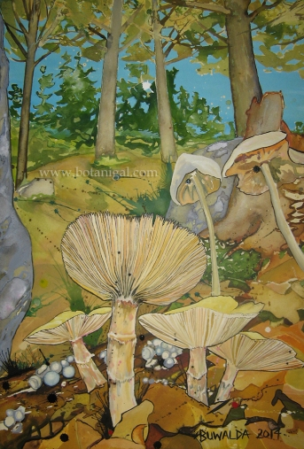 pete-russula2014highres