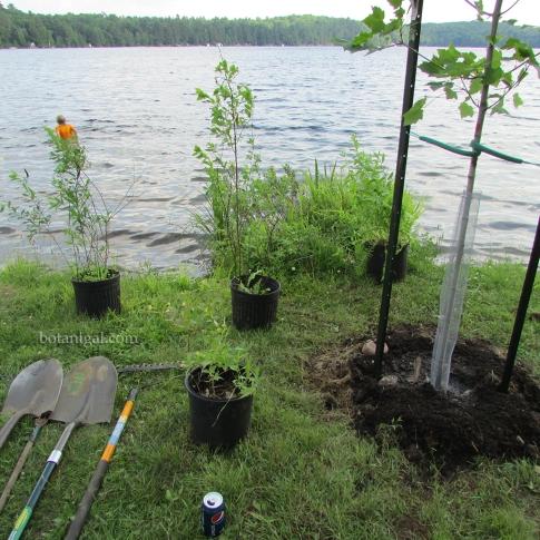 R.K. GIVER shoreline plants 135 wtm