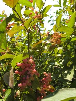 r-k-wild-raisin-img_1491