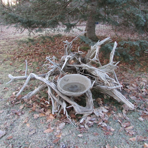 Driftwood birdbath frosty December 11 2015 249.jpg