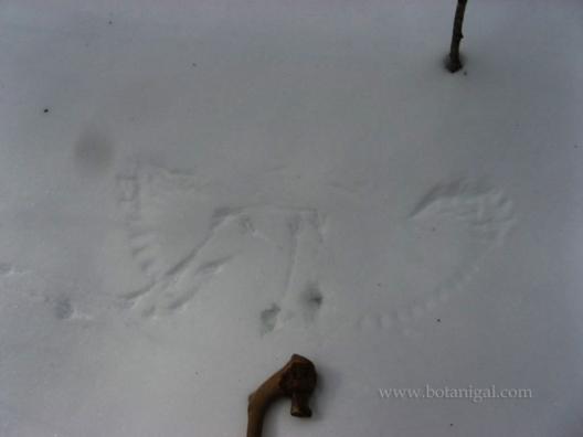 r-k-wing-prints-in-snow