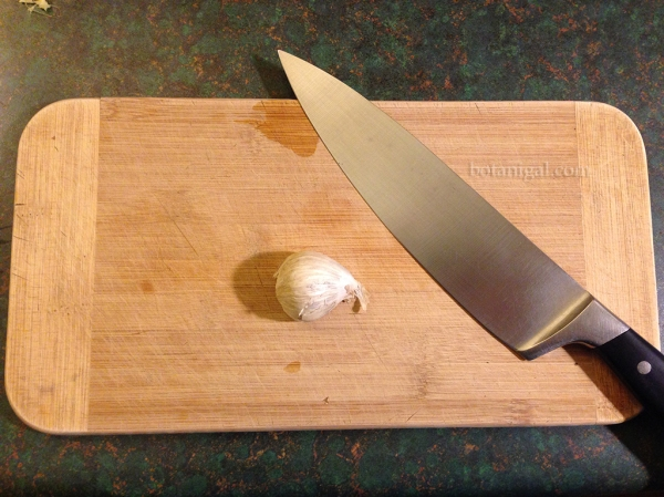 Clove of garlic with substantial knife IMG_3382.jpg