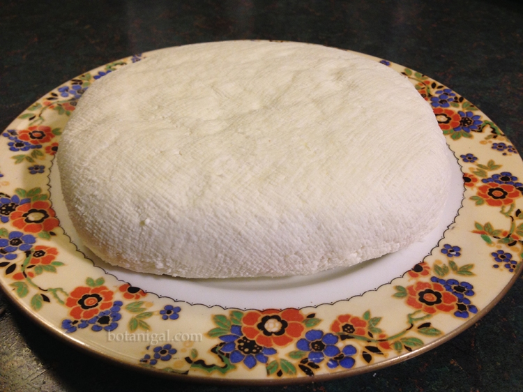 Finished cheese IMG_3622.jpg