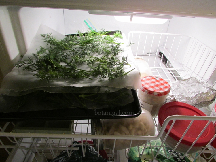 R.K. Herbs layered in freezer 090.jpg