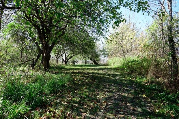 R.K. 15 Hunter's Bay Trail Orchard Park wtm_RXB9043.jpg