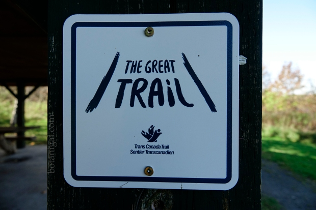 R.K. 3 The Great Trail Hunter's Bay Trail wtm_RXB9011.jpg