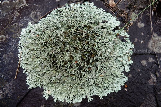 R.K. South Portage Lichen Madness 4 October 29 2017 wtm_RXB9360.jpg