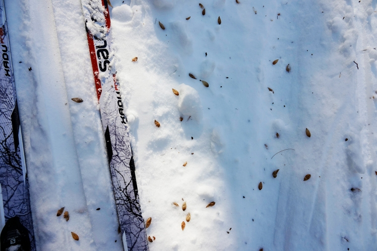 16. R.K. Ironwood seed drop with skis BMRC Feb 13 2018 wtm_RXB1611.jpg